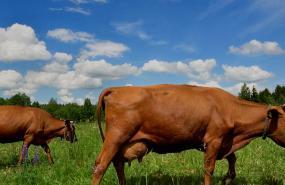 田舎の生活